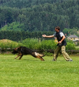 © www.hundeschule-spittal.at